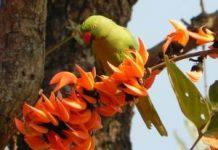 Happy Holi 2018 Image Parrot flower