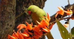 Happy Holi 2018 Image Parrot flower