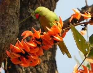 palash flower and parrot