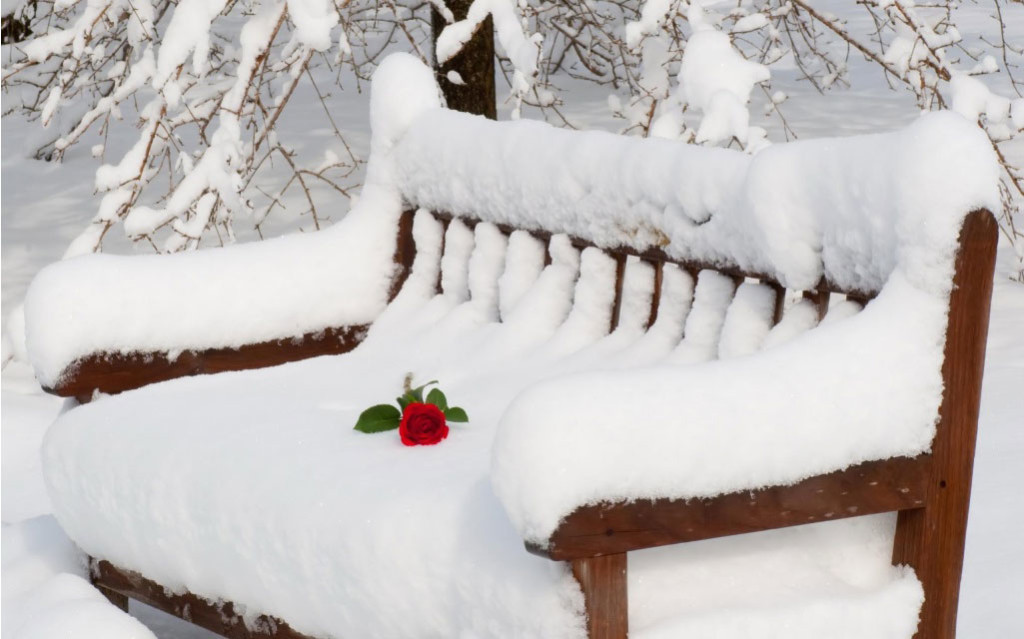 rose on Snow chair Valentines day 2018 HD Graphics
