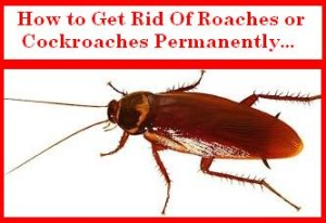 Get Rid of Roaches or Cockroaches Permanently
