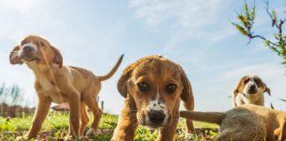 Richie & Burnsie (A Balance Diet Beagle)