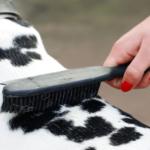 Dog-Grooming-USA